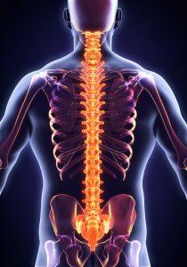 spine-image-210x300.jpg